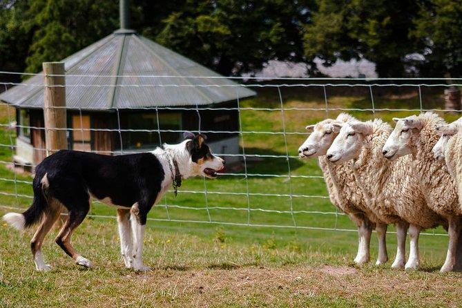 Akaroa Shore Excursion: Banks Peninsula, Christchurch City Tour and Sheep Farm Tour