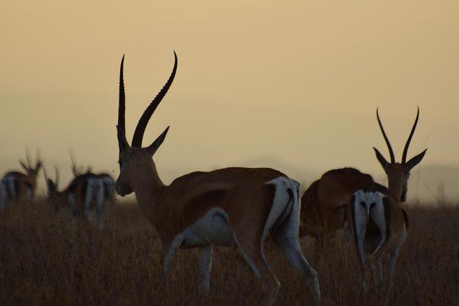 4 Days 3 Nights Masai Mara