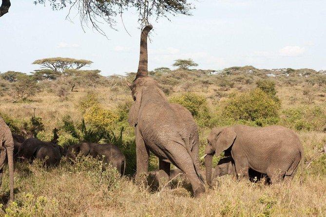 3 Days Manyara Ngorongoro and Tarangire