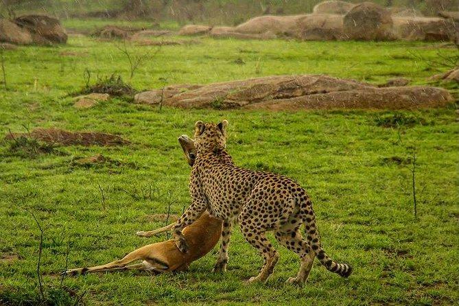 4 Day Camping Safari