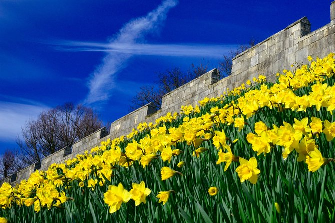 The walled city in full bloom