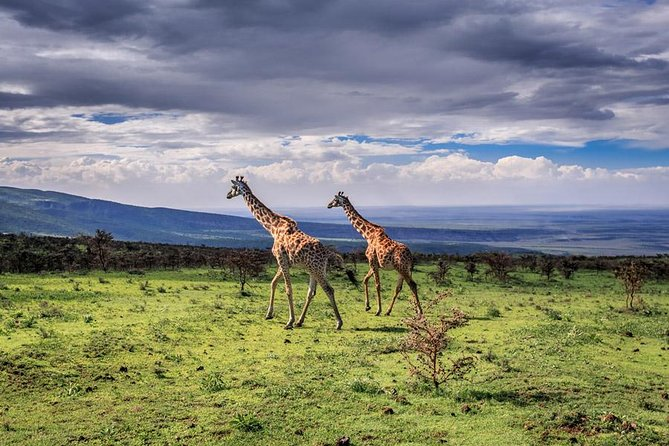 4 Days Tarangire Serengeti Ngorongoro Crater photo 14