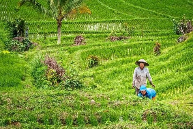 3 Hours Mystical Valley of the Bali King Trek