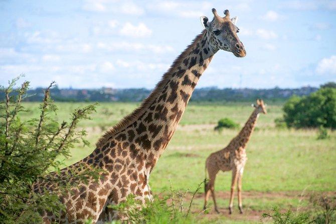 Half Day Nairobi National Park and Elephant Ophanage Tour From Nairobi