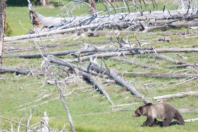 2-Day Private Bear and Wolf Safari Tour