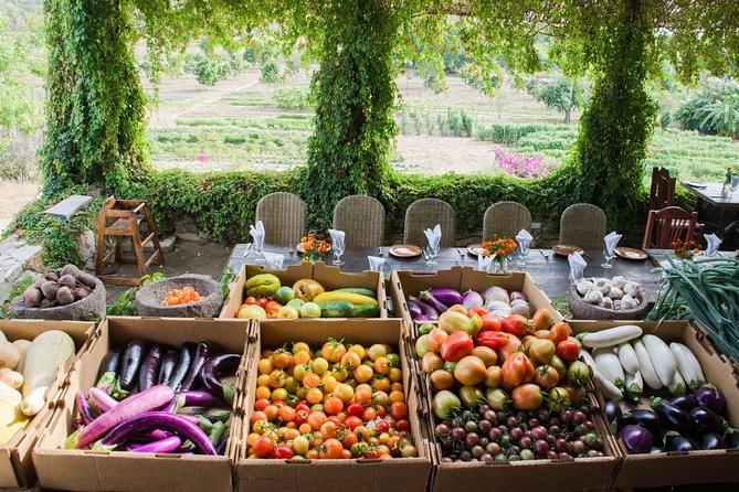 Organic Farm to Table