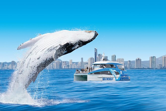 Gold Coast Whale Watching Cruise from Sea World