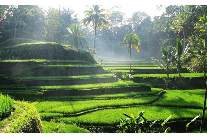 PrivateTour: Ubud,Taman Ayun Temple & Tanah Lot Sunset Tour with Hotel Transfer