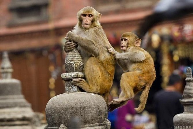 Private Day Tour of Abhaneri Stepwells with Monkey Temple