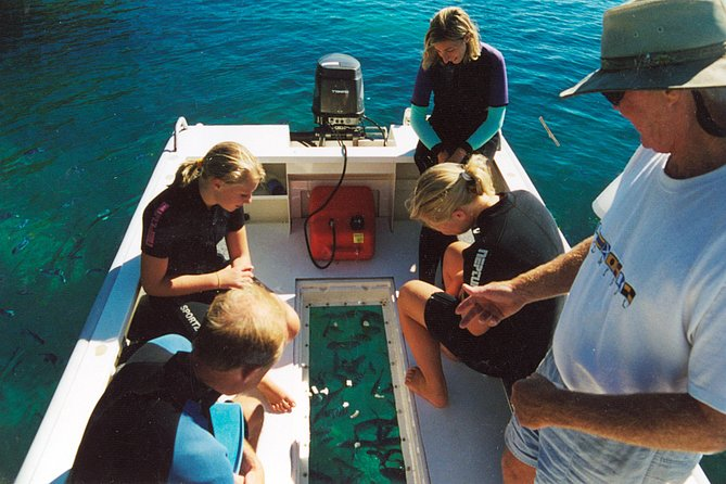 Glass bottomed dive tender enables non swimmers to appreciate the wonders of the Great Barrier Reef without getting wet.