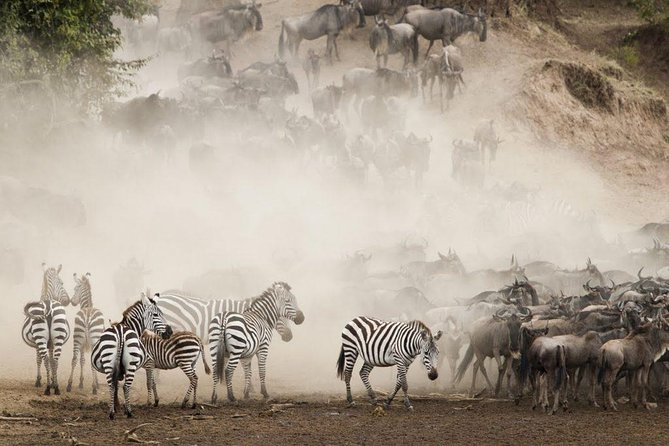 10 Days Magical Migration and Beach Tour of Tanzania