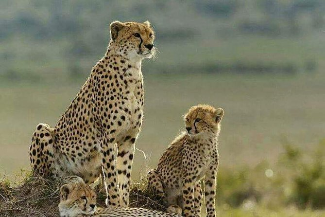 3 Days Masai Mara Budget Camping Safari Experience