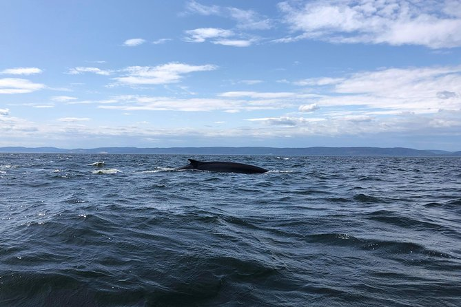 From Quebec City: Whale Watching Cruise with Transportation