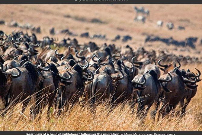 2 days Masai mara (by road ) Departing Nairobi
