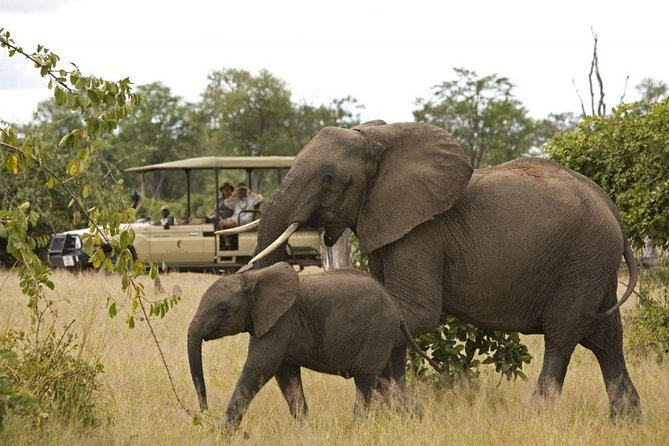 Kruger National Park Full Day Big 5 Safari Small Group Tour From South Africa photo 10
