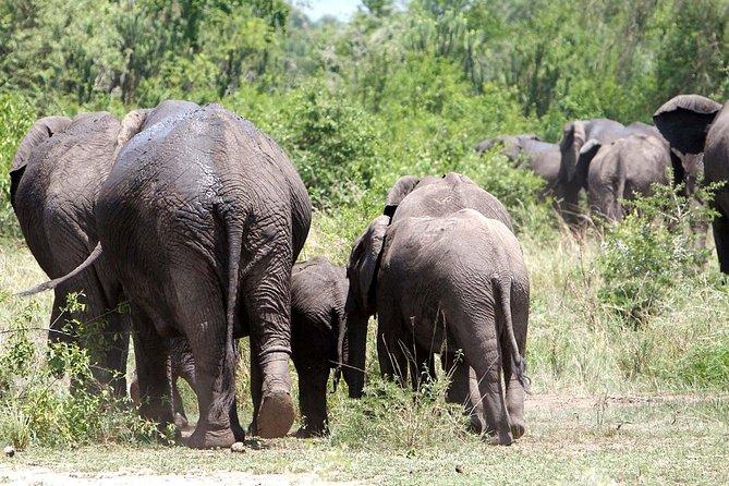 5-Day Big 5 Kidepo Safari