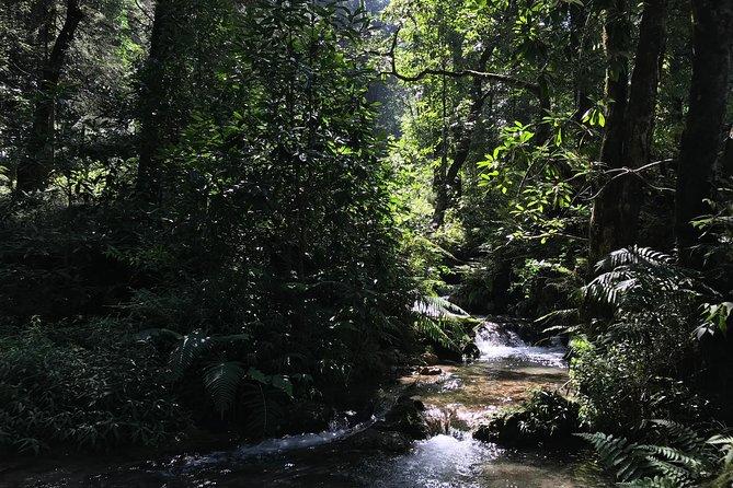 Benog Forest Hike & Campout: