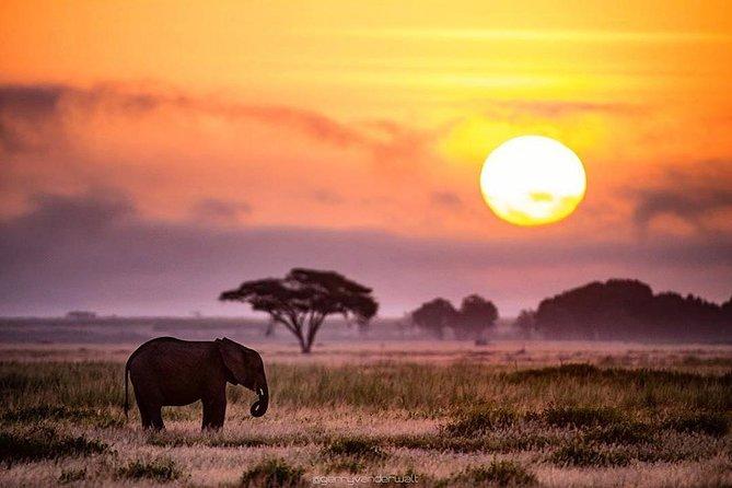 7 days lodge safaris