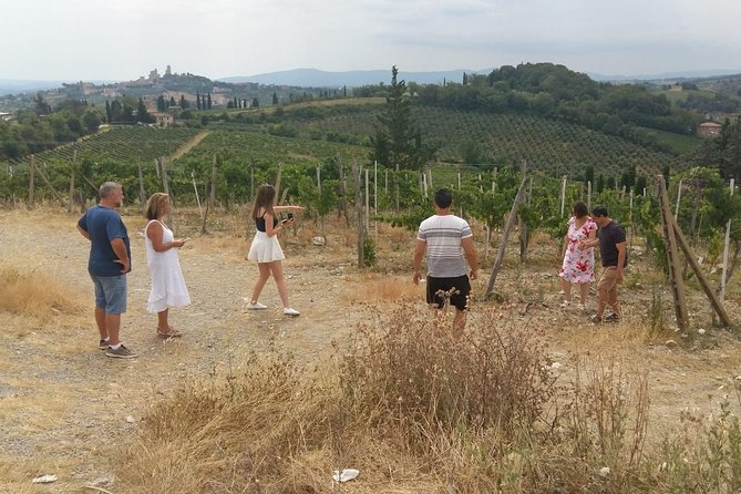 Wine Cheese and EVO Oil Tastings Southern Tuscany Fullday from Rome photo 2