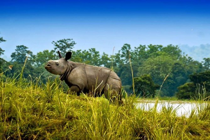 7-Day Kaziranga Meghalaya Tour - Explore the Wild East