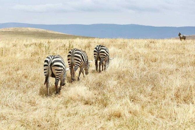 4 Days Adventurous Camping Safari