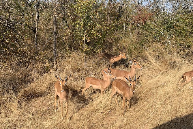 Kruger National Park Full Day Big 5 Safari Small Group Tour From South Africa photo 27