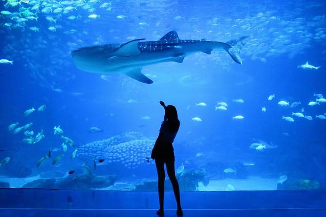 Image result for DUBAI AQUARIUM