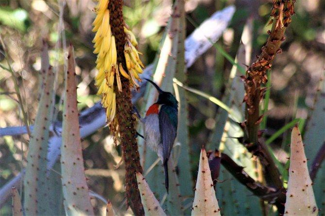 Precious Sunbird