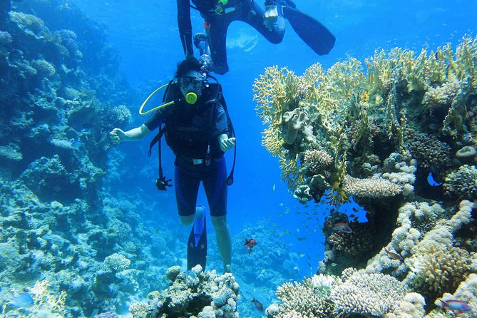 Ras Mohamed Snorkeling & Diving Sea Trip by Boat- Sharm El Sheikh