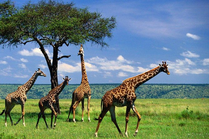 3 Days Tanzania Camping Safari photo 6