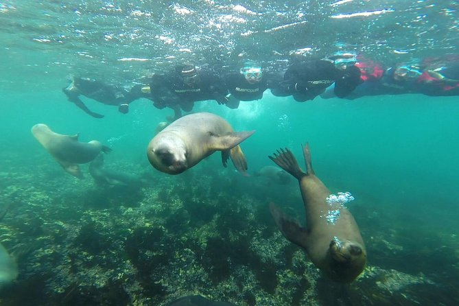 Snorkeling with Sea Lions and Diving Excursions.