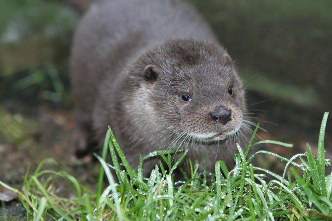 Ranua Arctic Wildlife Zoo & A Sweet Deal at Fazer