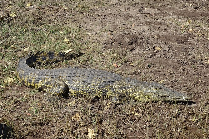 See crocodiles