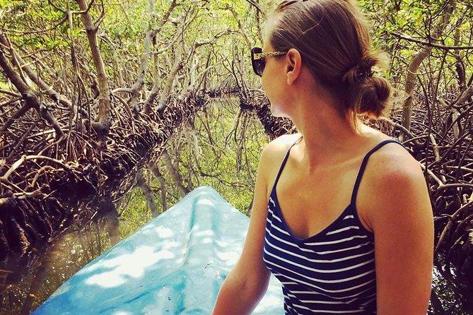 Roatan Mangrove Tunnels Adventure