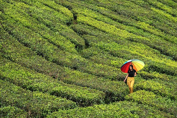 Private Full-Day Cameron Highlands Nature Tour from Kuala Lumpur photo 4