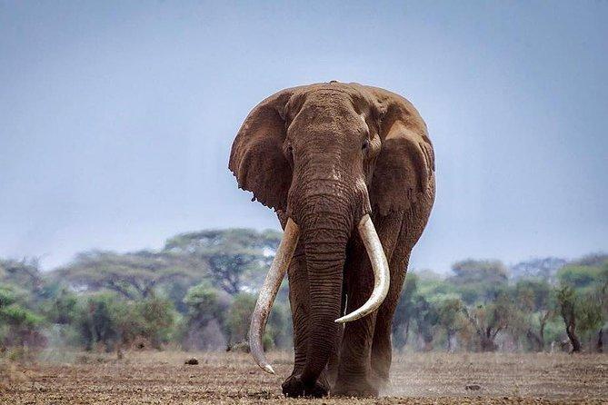 3 days Masai Mara Daily Departures