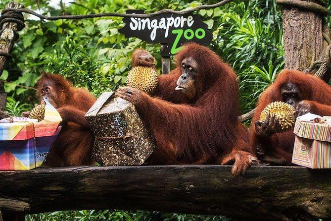 Singapore Zoo Tour ( Do - It - Yourself ) (Sic )