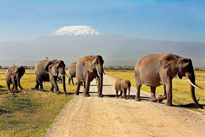 3 Days Amboseli Safaris from Nairobi