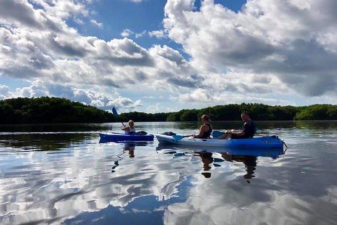 Saint Petersburg Mangrove Kayak Tour