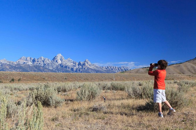 Half-Day Grand Teton Wildlife Safari Private Tour