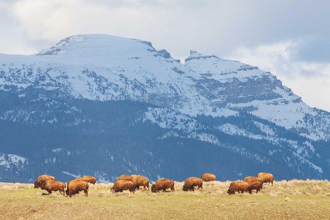 Half-Day Grand Teton Wildlife Safari Private Tour