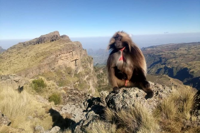 Simien Mountains Trekking Adventure