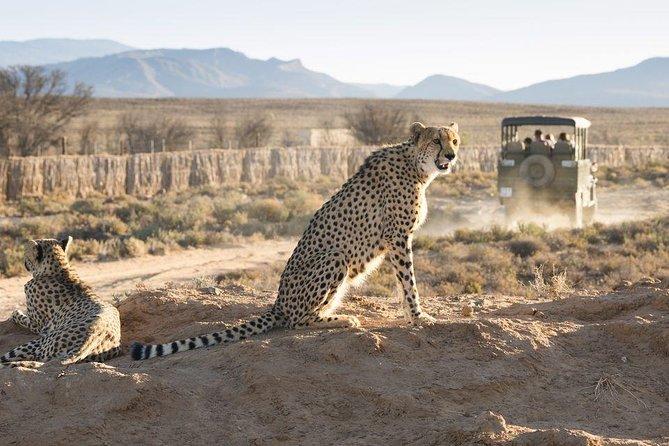 Cape Town 3-Day Attraction Tour:Aquila Safari Tour & Wine Tasing & Robben Island