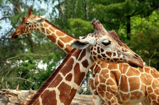 6.a.m -1p.m Nairobi national Park/elephant orphanage & Giraffe Centre