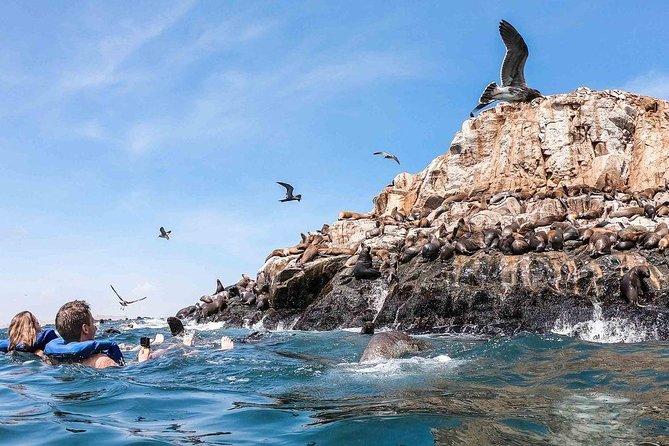 Palomino Islands Tour
