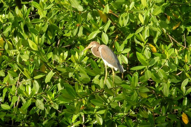 Birds of the mayan World 1 photo 4