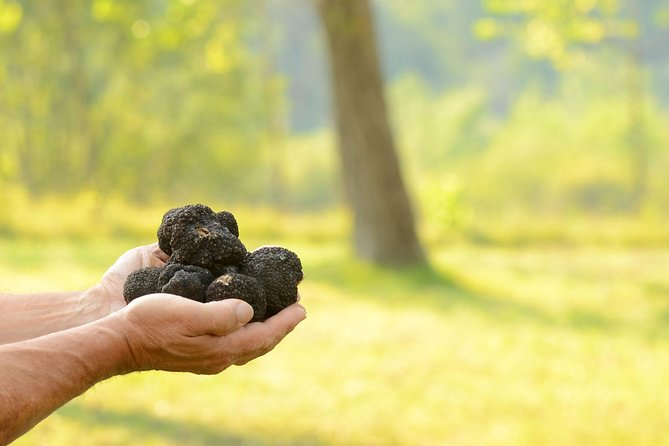 Truffle Hunting in the Woods of Istria and Wine Tasting with Alex