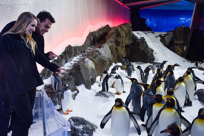 Penguin Passport at SEA LIFE Melbourne Aquarium