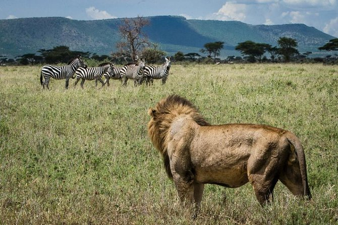 3 days in Maasai Mara photo 1