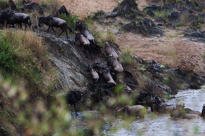 3 Days Serengeti National Park Safari